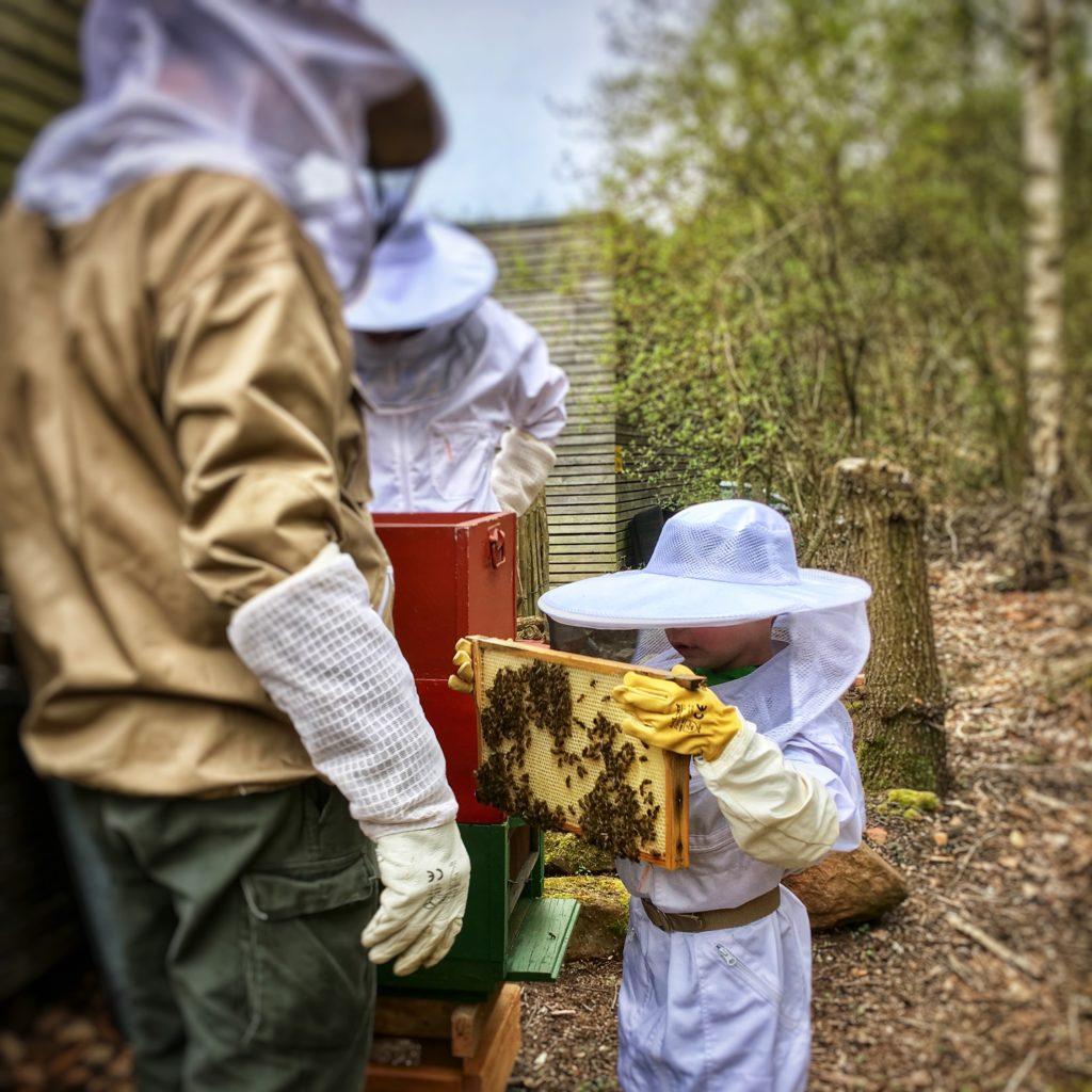 Die ERZHÜTTENIMKER bei der Arbeit am Bienenstock...