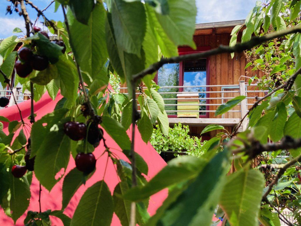 Kirschbaum und Bienenstock