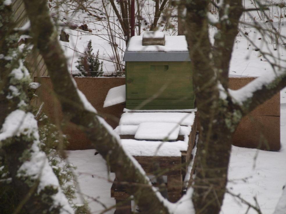 Mit Schnee bedeckter Bienenstock. Zwischen einer Astgabel hindurch fotografiert.