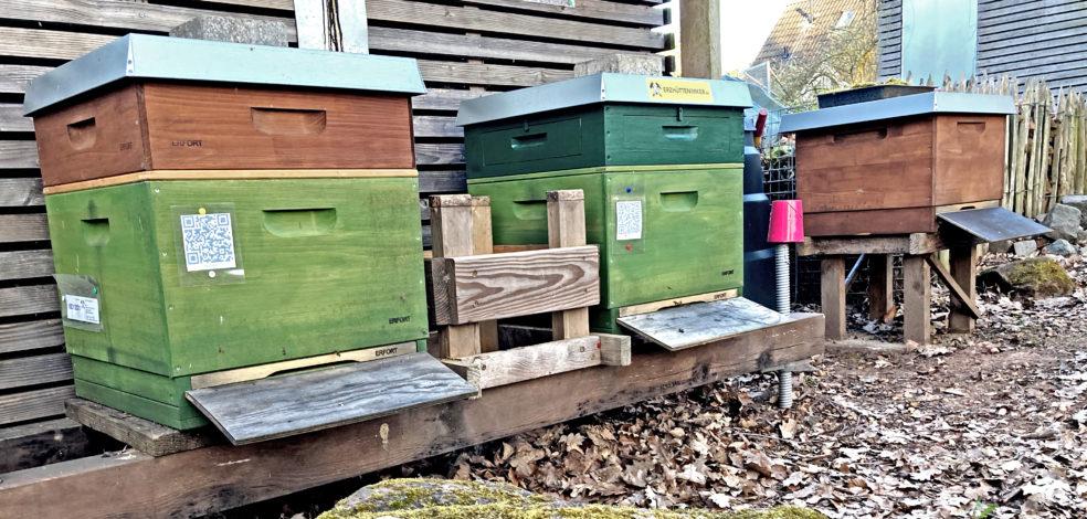 Bienenstand der Erzhüttenimker im April.