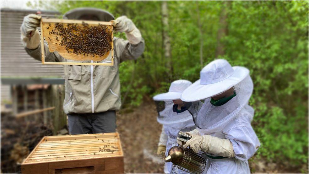 Der Imkernachwuchs arbeitet fleißig am Bienenstock.