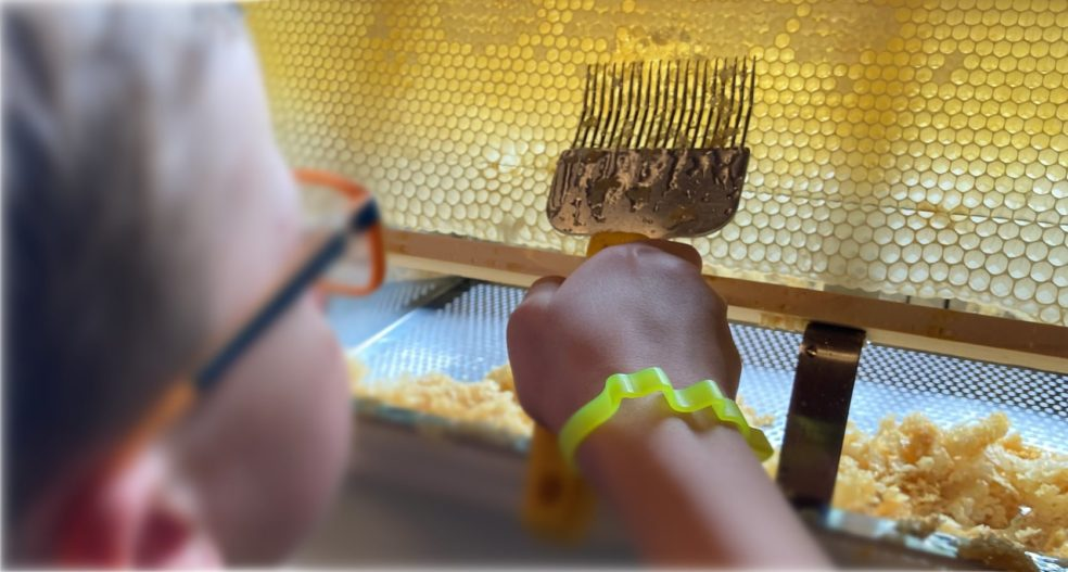 Jungimkern mit einer Entdeckelungsgabel beim Entdeckeln einer Honigwabe.
